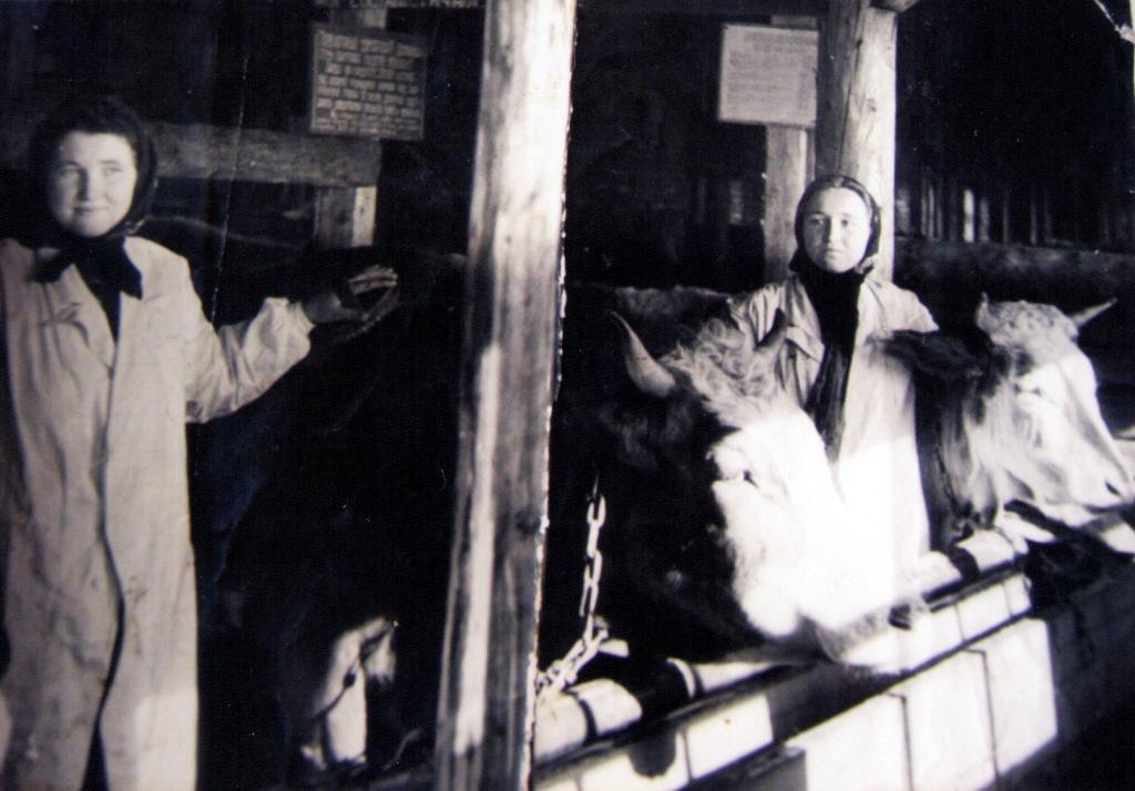 Гуцули і колгосп: як радянська влада вирощувала буряки в Карпатах 8