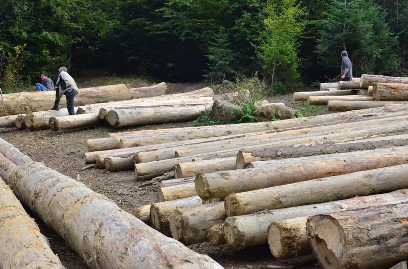 """Елітні вирубки: як НПП """"Гуцульщина"""" забезпечує дровами косівських суддів 2"""