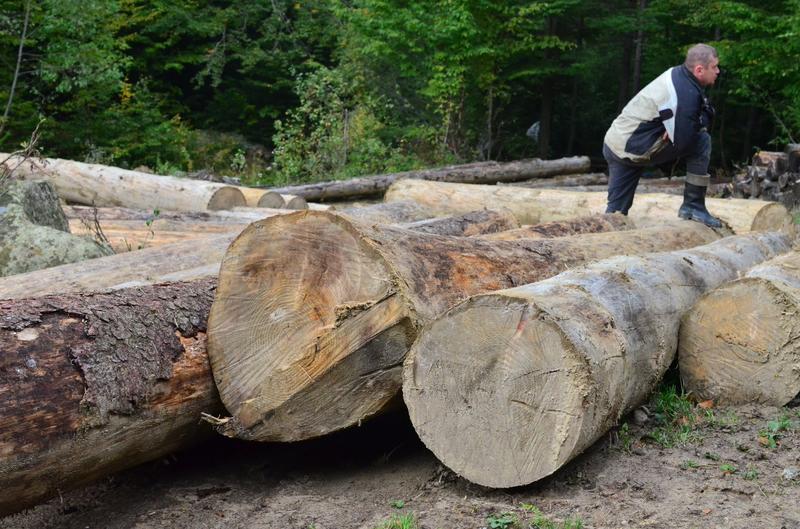 """Елітні вирубки: як НПП """"Гуцульщина"""" забезпечує дровами косівських суддів 20"""