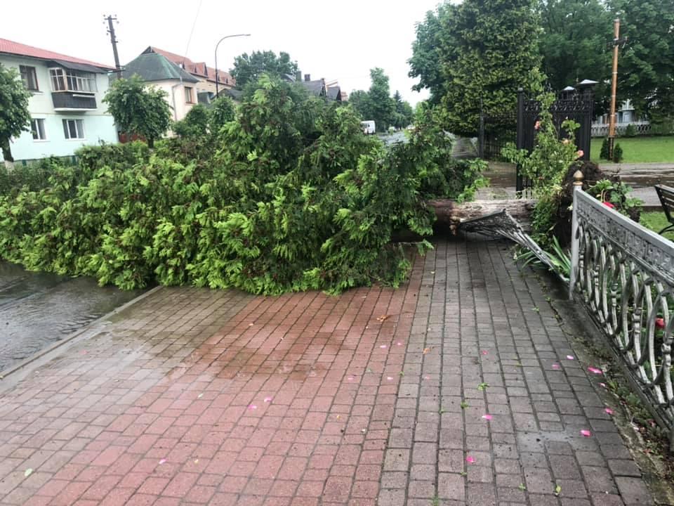 Богородчанами пронісся буревій: десятки повалених дерев, побиті машини і обірвані проводи 4