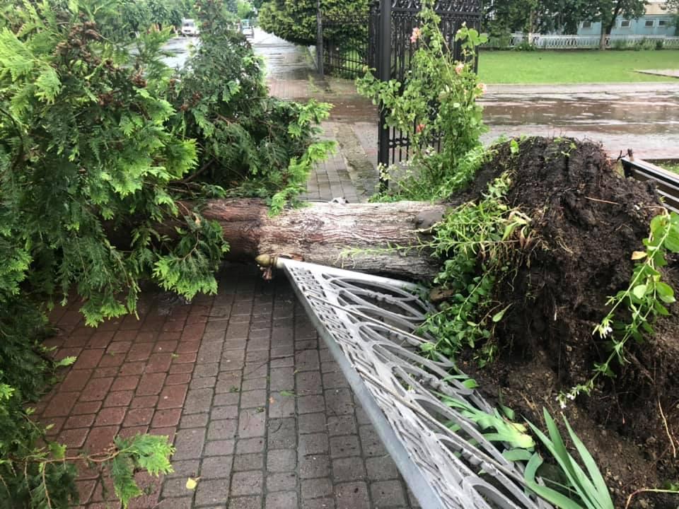 Богородчанами пронісся буревій: десятки повалених дерев, побиті машини і обірвані проводи 2