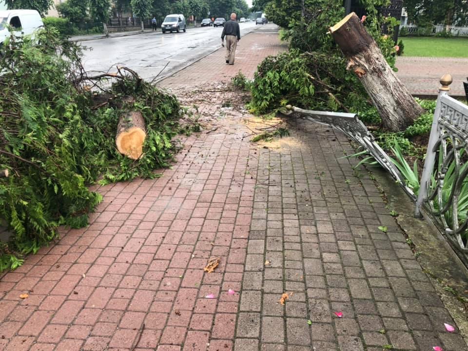 Богородчанами пронісся буревій: десятки повалених дерев, побиті машини і обірвані проводи 3