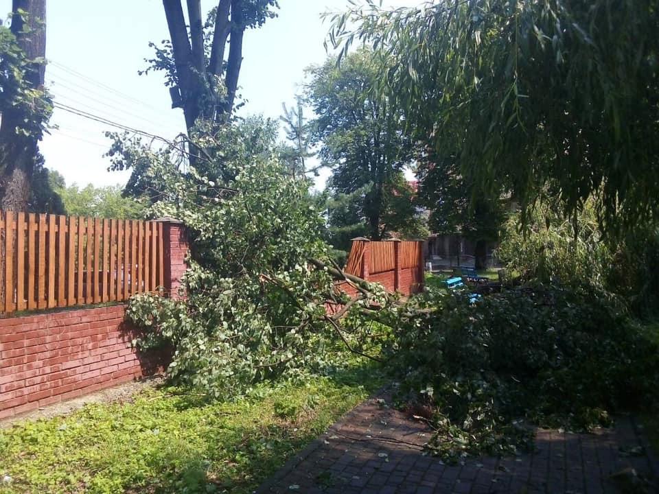 Богородчанами пронісся буревій: десятки повалених дерев, побиті машини і обірвані проводи 5