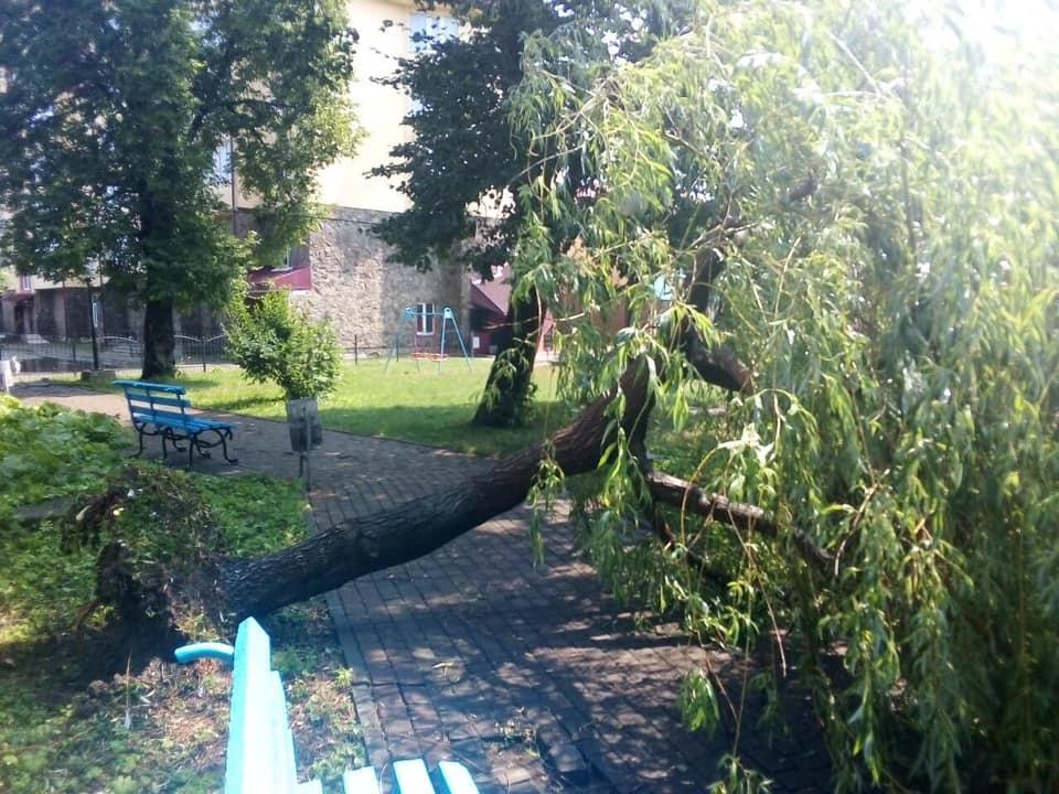 Богородчанами пронісся буревій: десятки повалених дерев, побиті машини і обірвані проводи 7
