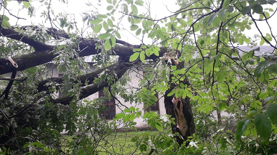 Богородчанами пронісся буревій: десятки повалених дерев, побиті машини і обірвані проводи 9