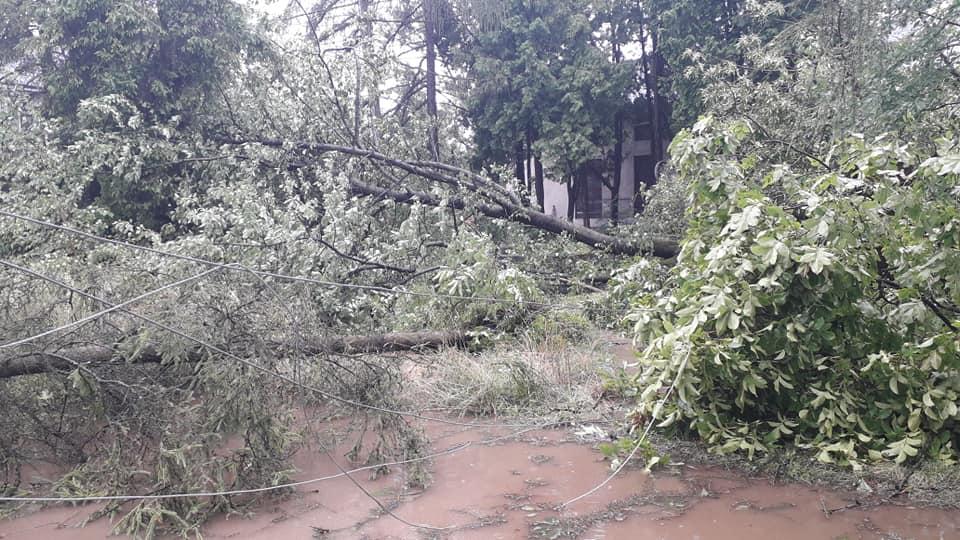 Богородчанами пронісся буревій: десятки повалених дерев, побиті машини і обірвані проводи 10
