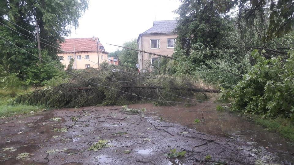 Богородчанами пронісся буревій: десятки повалених дерев, побиті машини і обірвані проводи 12