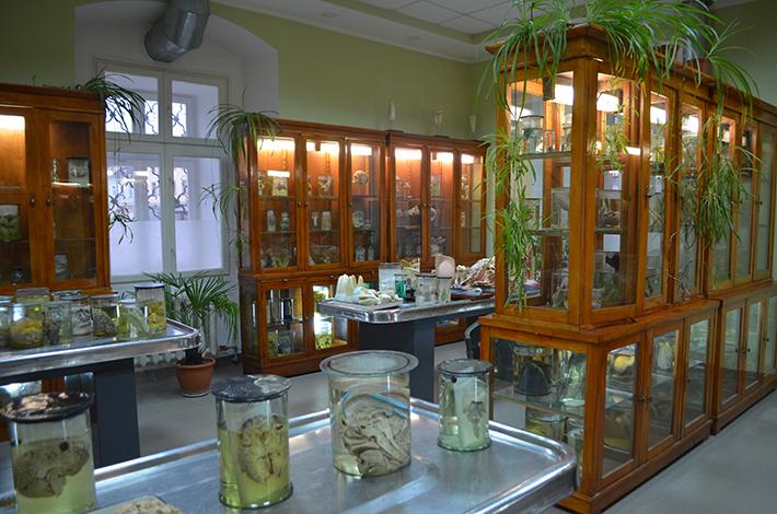 В Анатомічному музеї ІФНМУ поєднали медицину та мистецтво 3
