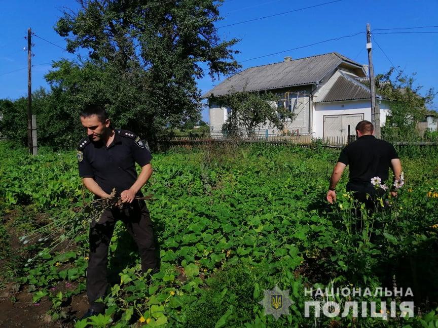 Поліцейські зірвали на подвір'ї у прикарпатця понад 300 рослин маку 1
