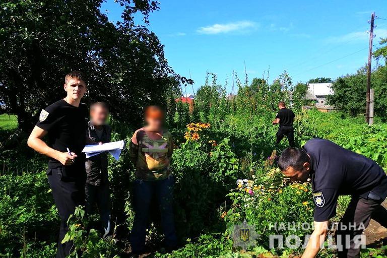 Поліцейські зірвали на подвір'ї у прикарпатця понад 300 рослин маку 2