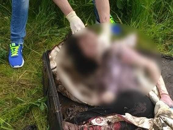 Апеляційний суд випустив вбивцю болгарської студентки під домашній арешт 3