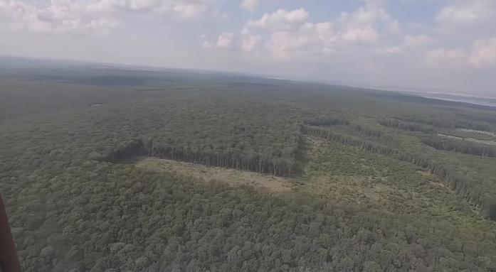 рубка лісу