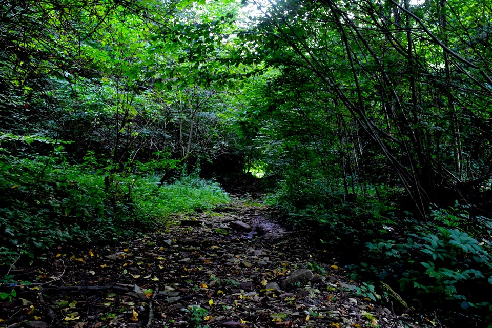 До Чернелицького замку: у Дністровському каньйоні прокладають новий маршрут 2