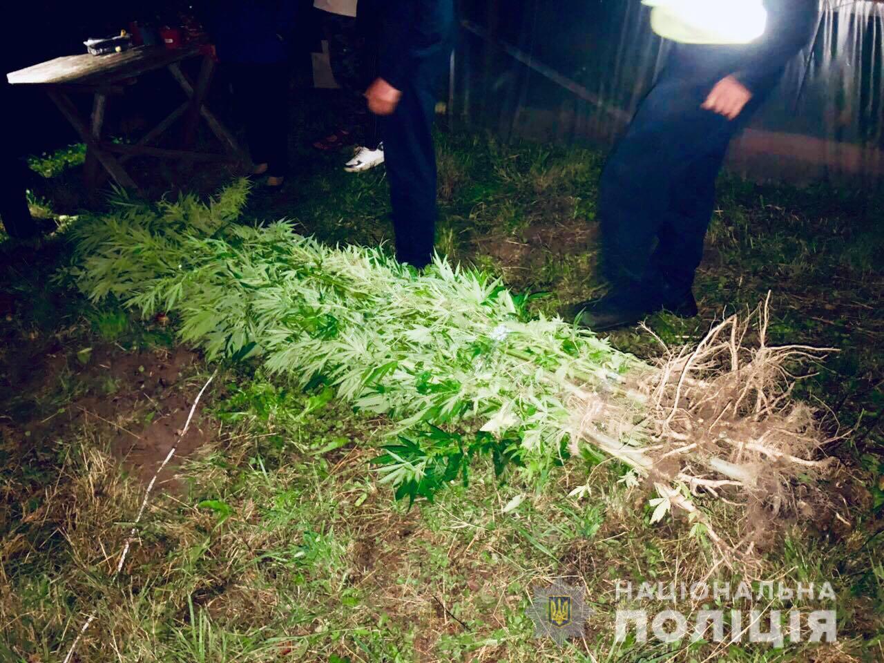 """Результат пошуку зображень за запитом """"Поліція Косівщини викрила чоловіка, який на території господарства вирощував коноплю"""""""