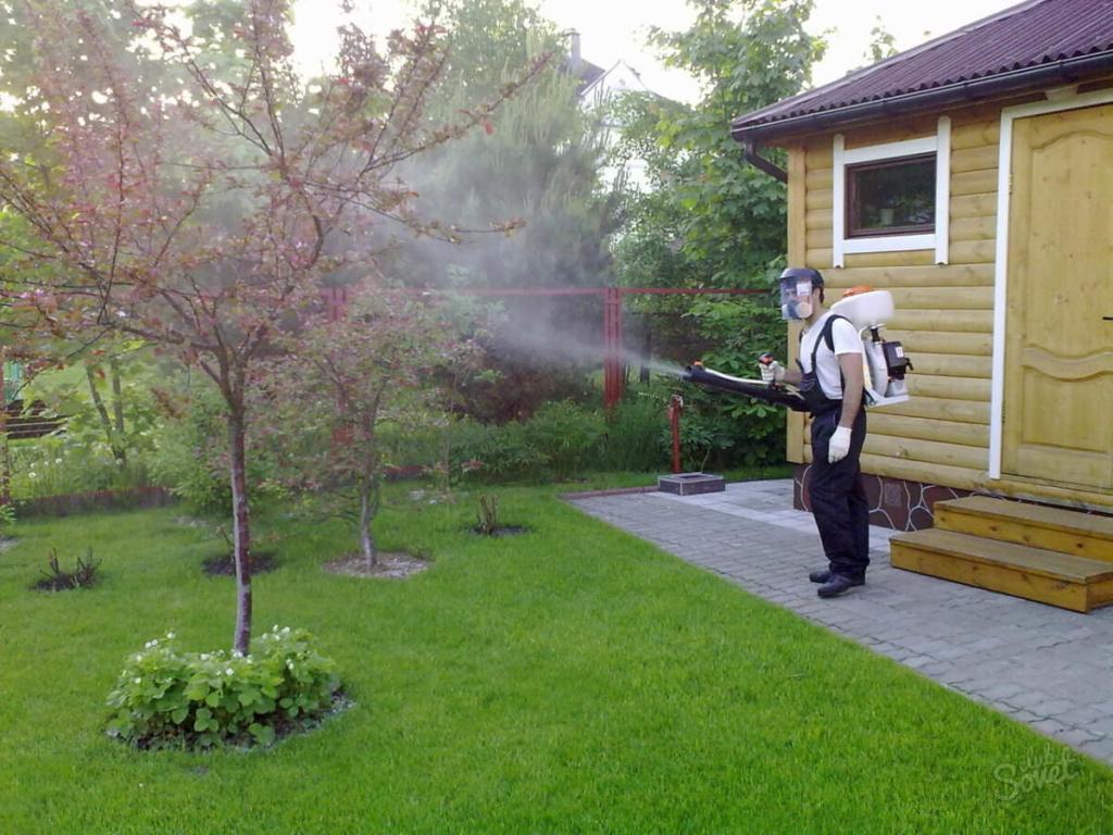 Врожай у садах на Прикарпатті нищить плодожерка 4