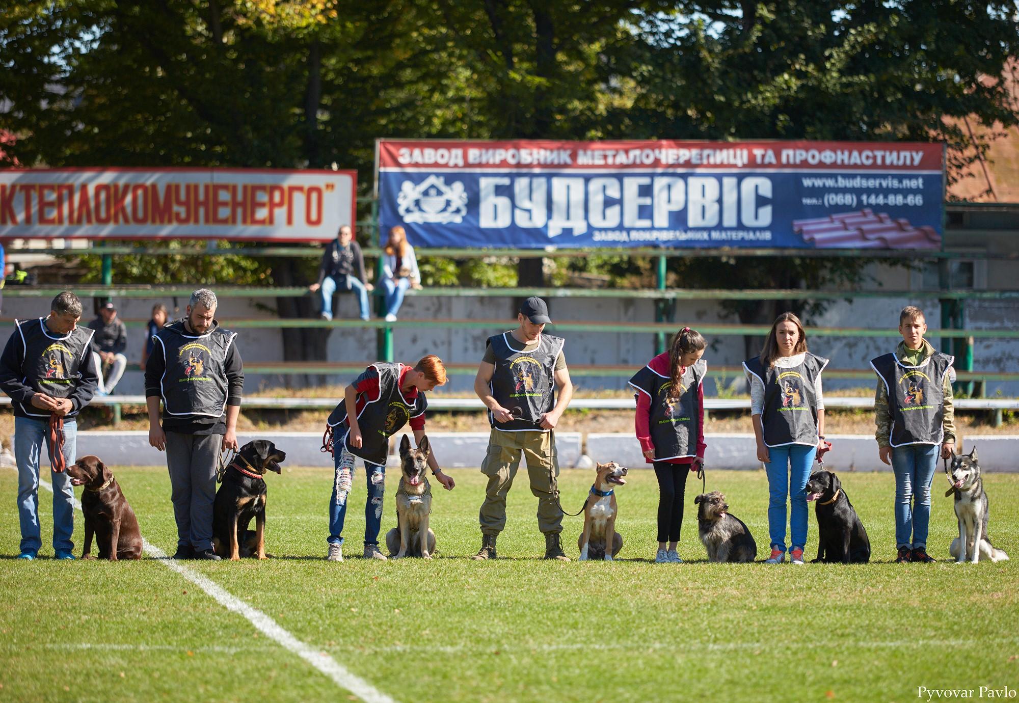 В Івано-Франківську 120 песиків взяли участь у виставці собак 2