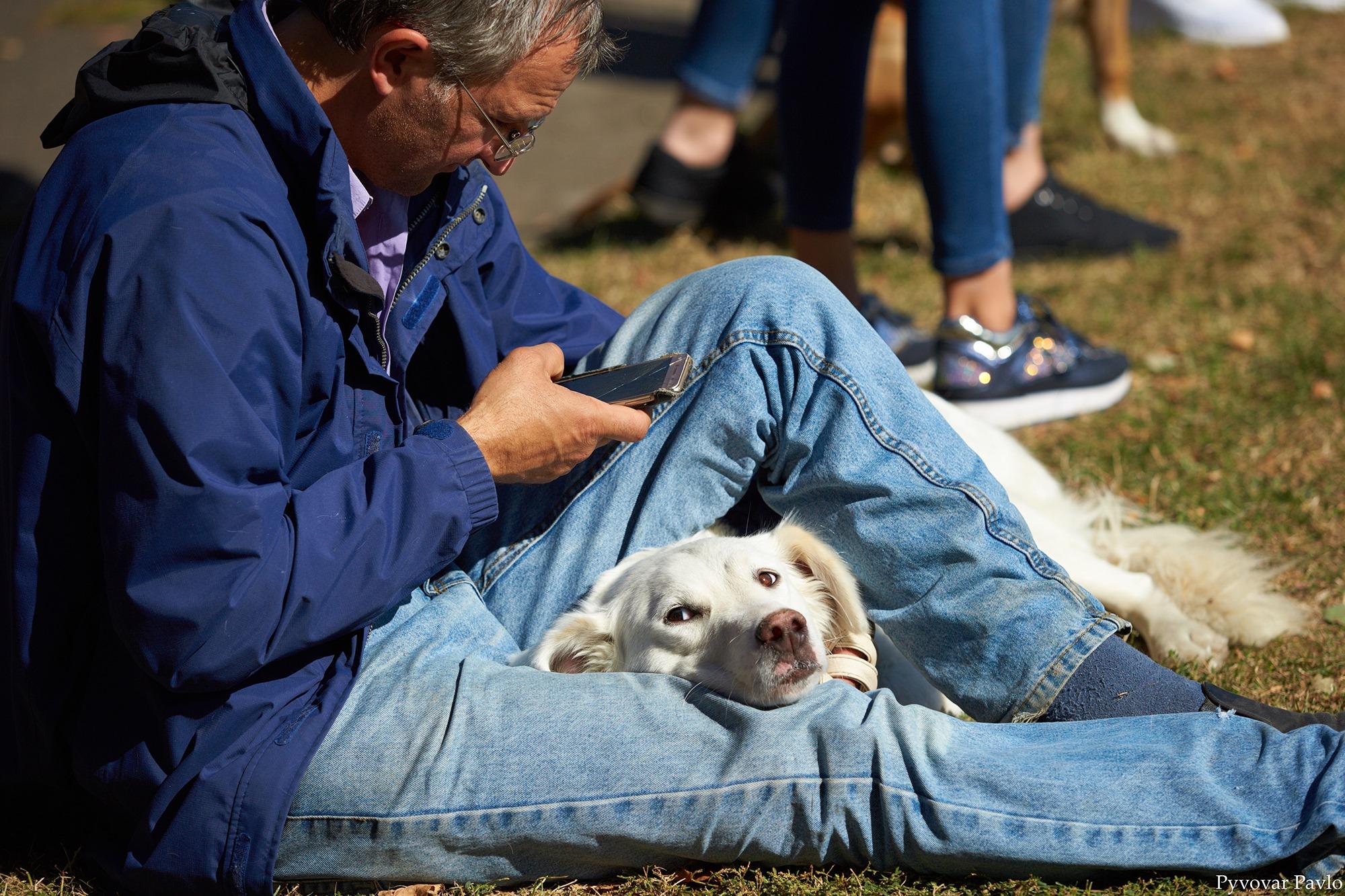 В Івано-Франківську 120 песиків взяли участь у виставці собак 4
