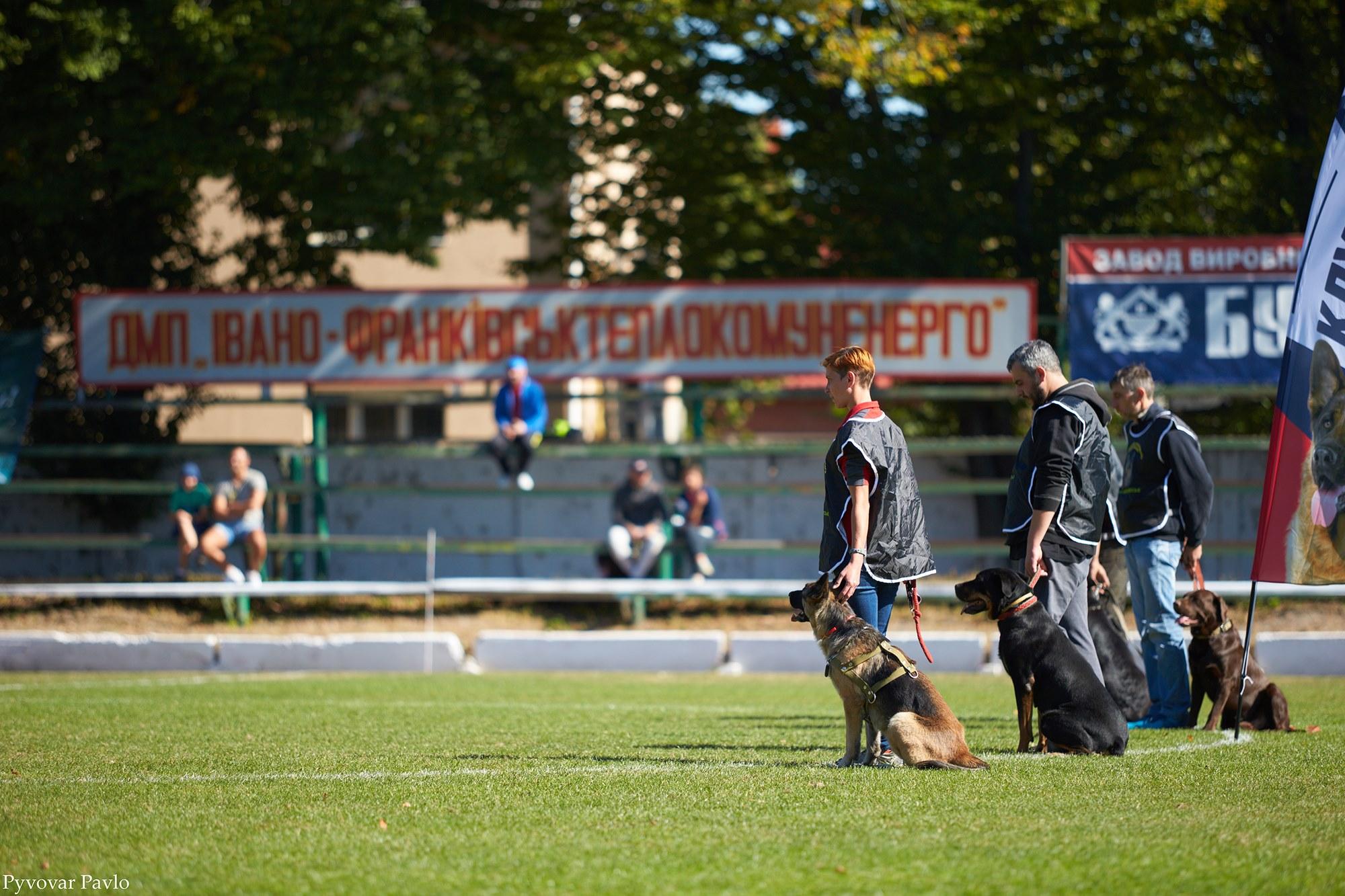 В Івано-Франківську 120 песиків взяли участь у виставці собак 8