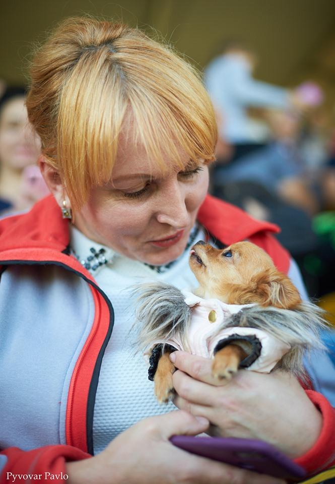 В Івано-Франківську 120 песиків взяли участь у виставці собак 10