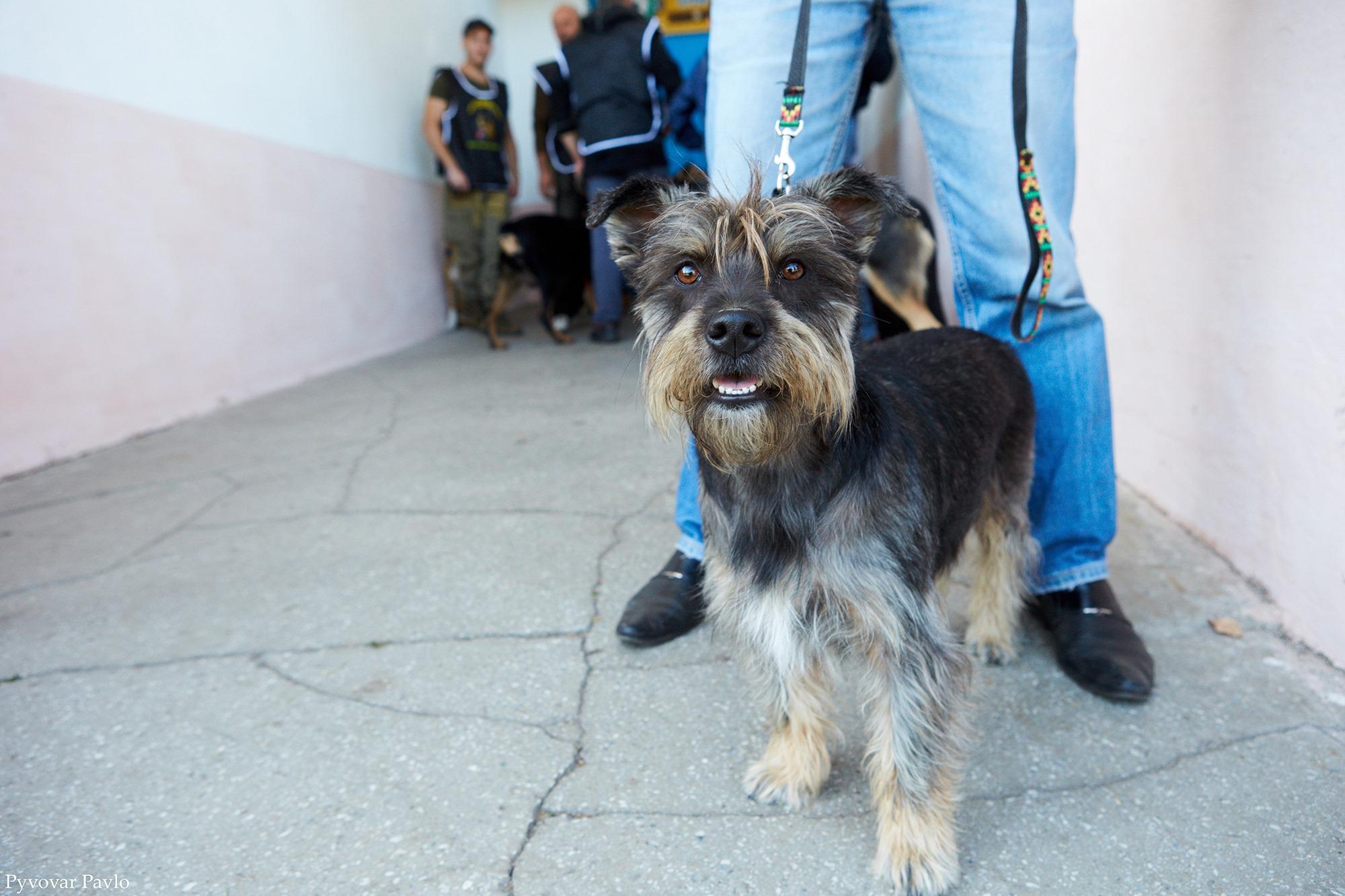В Івано-Франківську 120 песиків взяли участь у виставці собак 14