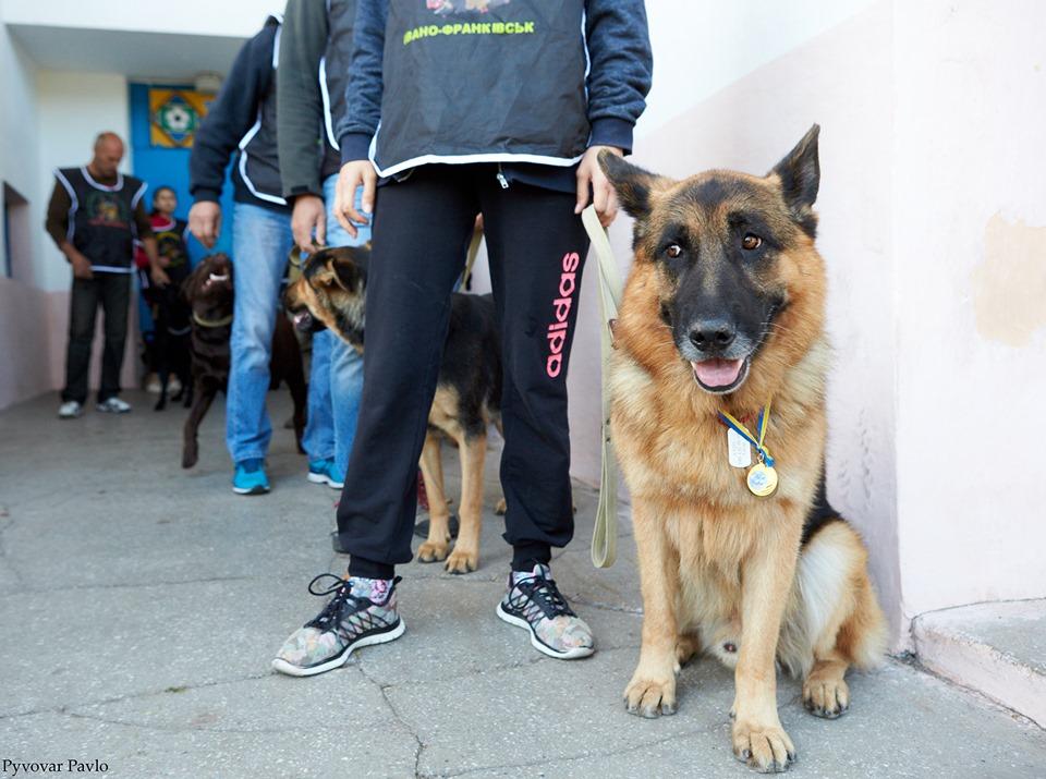 В Івано-Франківську 120 песиків взяли участь у виставці собак 18
