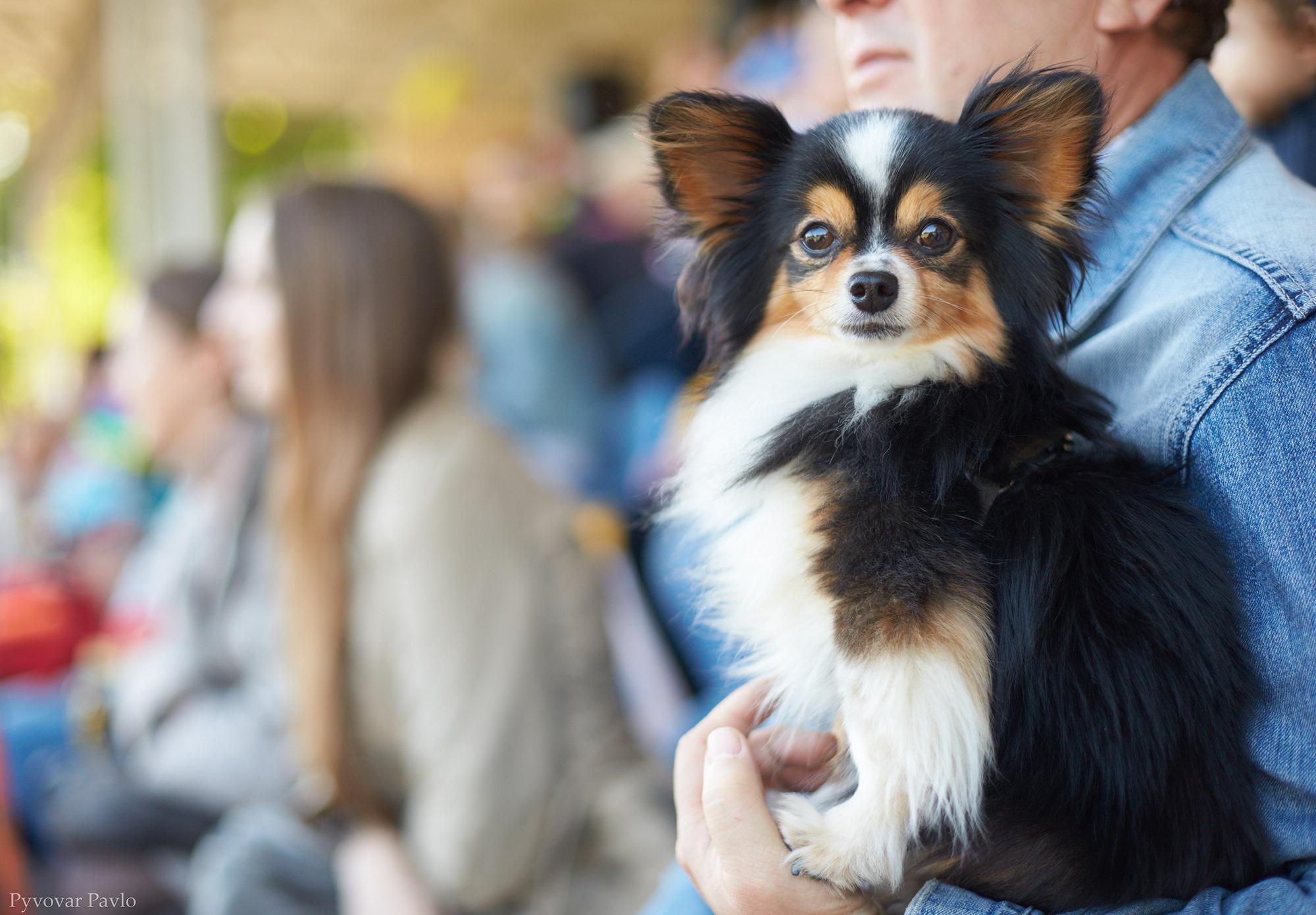 В Івано-Франківську 120 песиків взяли участь у виставці собак 20