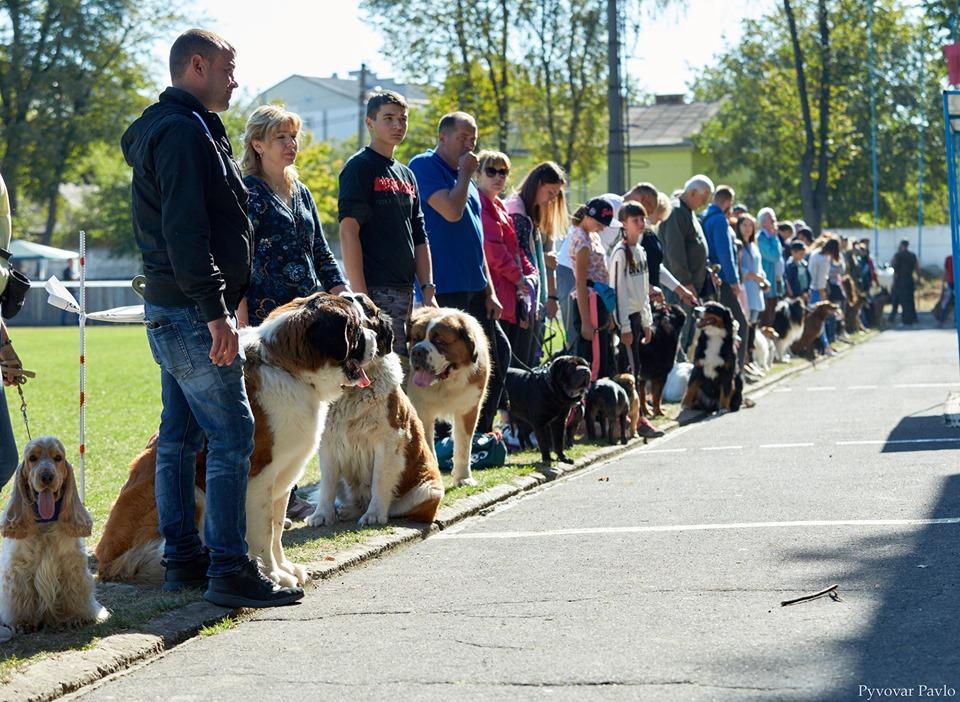 В Івано-Франківську 120 песиків взяли участь у виставці собак 26
