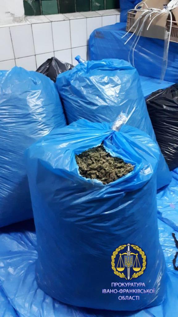 100 тисяч кущів і більше тонни марихуани: правоохоронці розповіли, як на Прикарпатті викрили рекордну плантацію коноплі 9