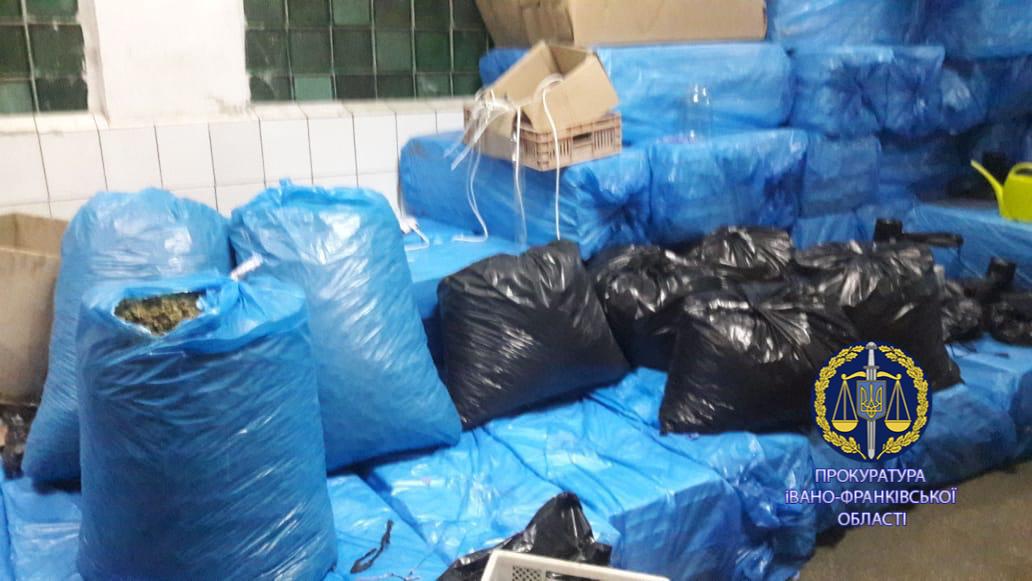 100 тисяч кущів і більше тонни марихуани: правоохоронці розповіли, як на Прикарпатті викрили рекордну плантацію коноплі 12