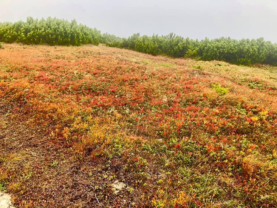 Неймовірні фото осінніх Карпат показали в мережі 6