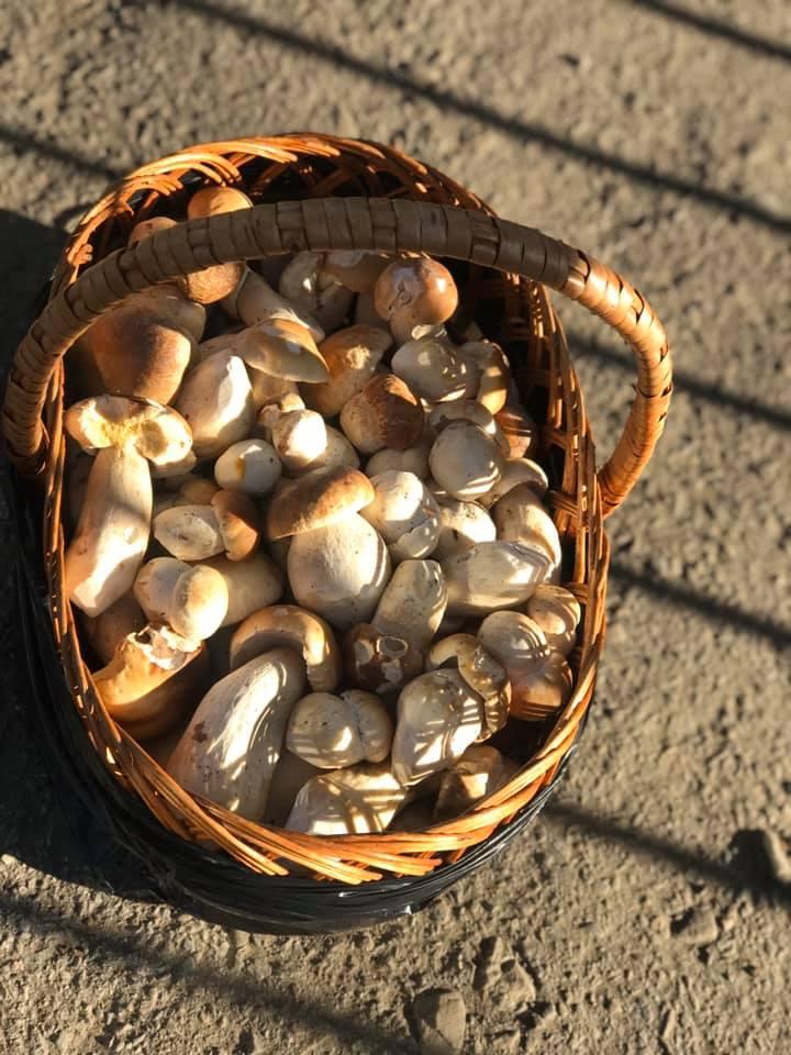 У Карпатах пішли гриби – осінні білі 4