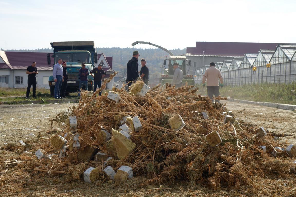 На Косівщині поліцейські знищили рекордну плантацію коноплі, яку виявили минулого місяця 2