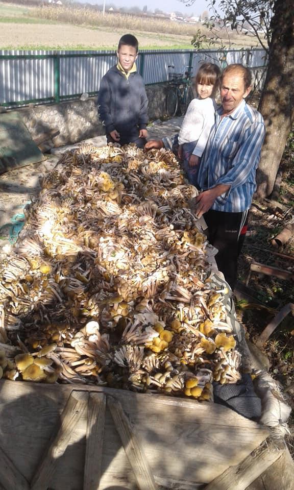 На Коломийщині назбирали фіру підпеньків: прикарпатці хизуються осінніми грибами 4