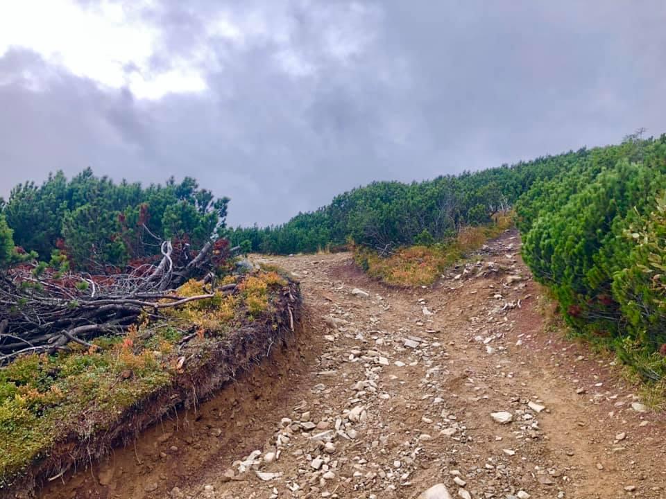 Неймовірні фото осінніх Карпат показали в мережі 2
