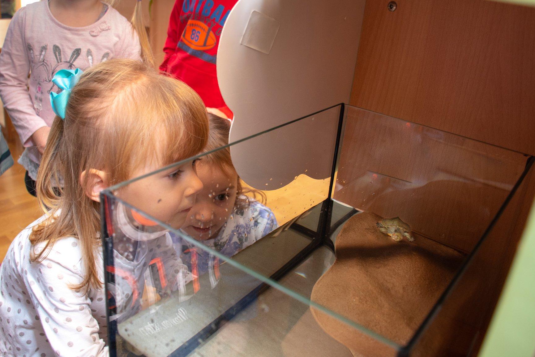 У двох франківських дитсадках завели черепашок 6