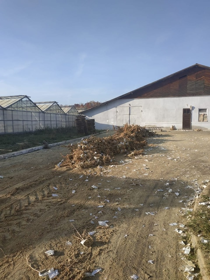 На Косівщині поліцейські знищили рекордну плантацію коноплі, яку виявили минулого місяця 6