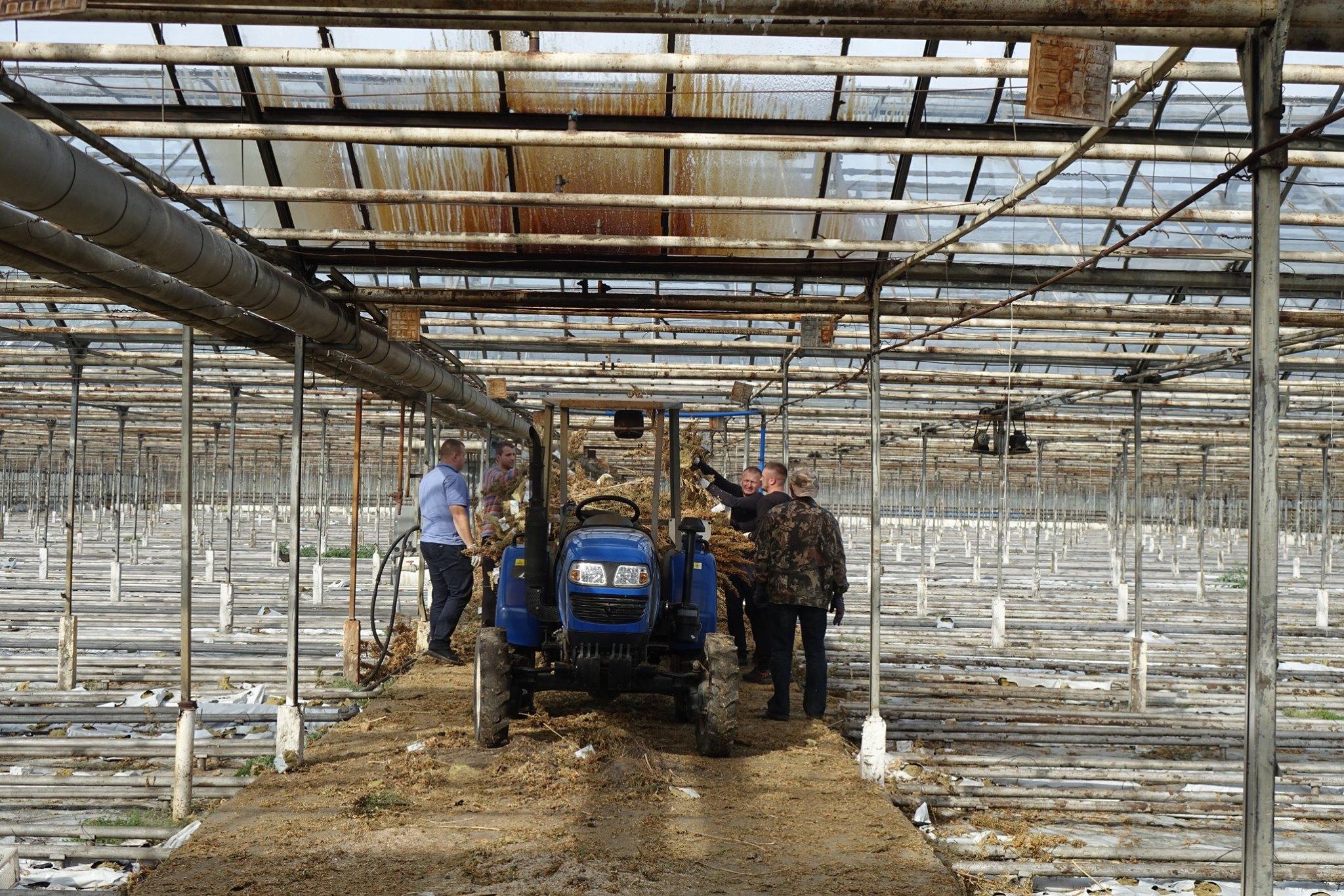На Косівщині поліцейські знищили рекордну плантацію коноплі, яку виявили минулого місяця 8