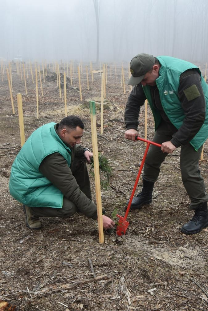 Поблизу Франківська висадили гектар лісу у вигляді вишиванки 2