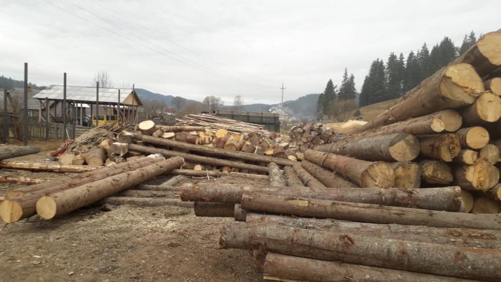 СБУ на Прикарпатті накрила підприємців, які незаконно експортували ліс 2