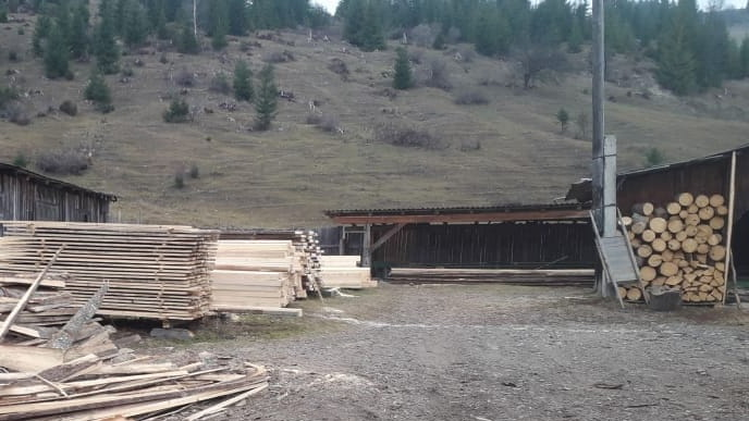 СБУ на Прикарпатті накрила підприємців, які незаконно експортували ліс 6