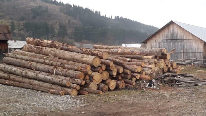 СБУ на Прикарпатті накрила підприємців, які незаконно експортували ліс 8