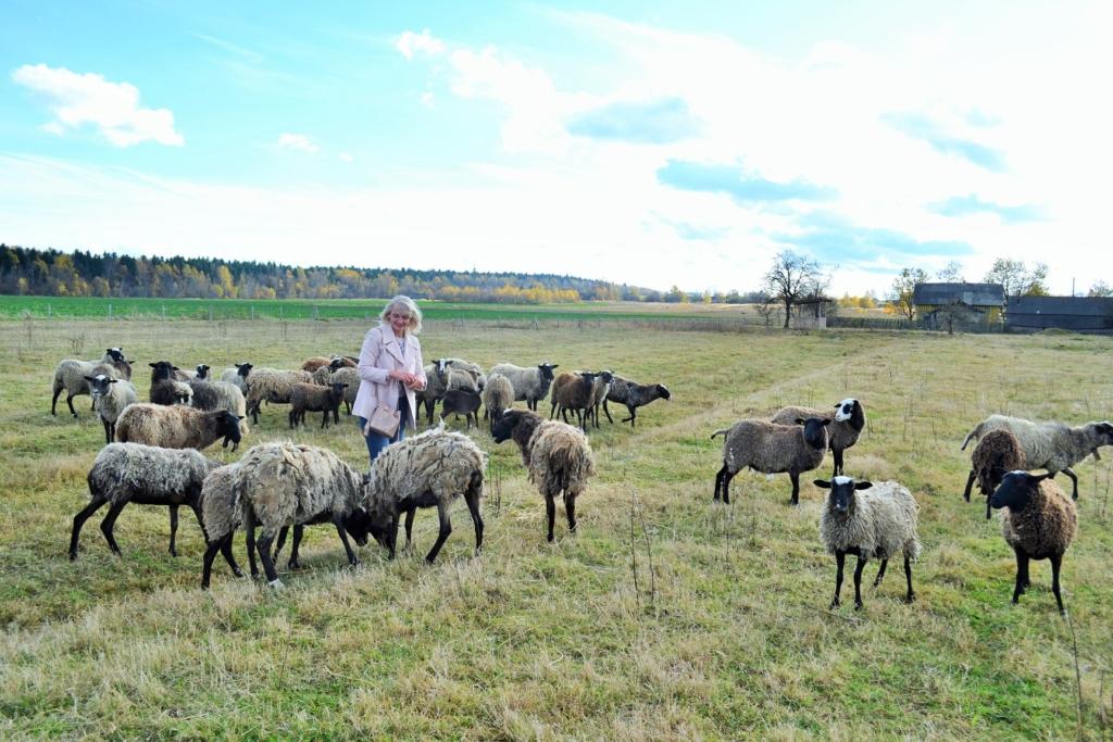 На Коломийщині створили овечу ферму – планують запустити сироварню 4