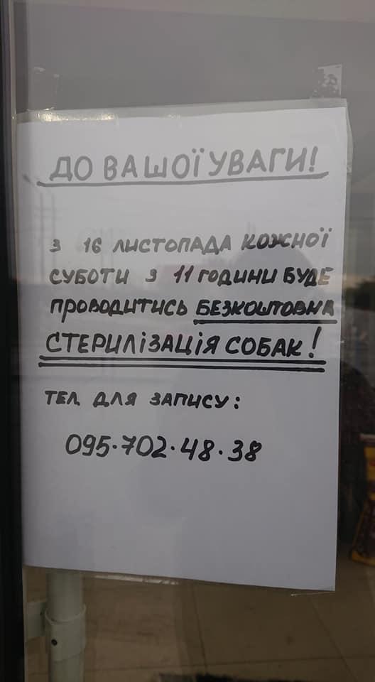"""По суботах """"Дім Сірка"""" у Франківську безкоштовно стерилізує тварин 2"""