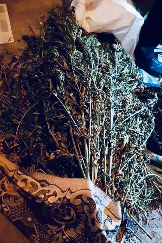 Затримали прикарпатця, який вдома вирощував марихуану, – вилучили 4 мішки 4