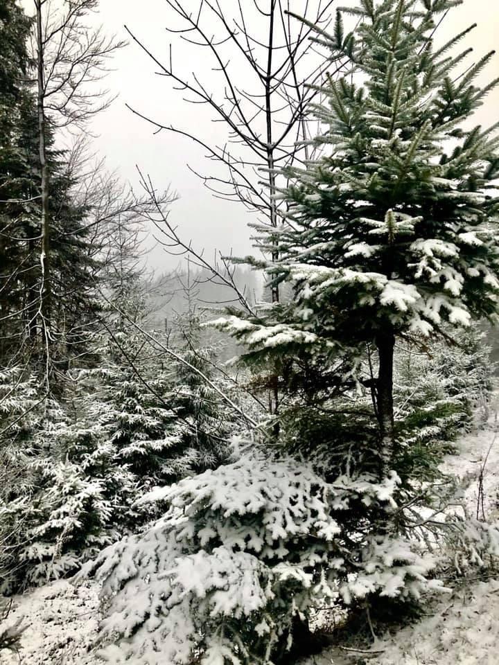 Карпати засипало снігом 6