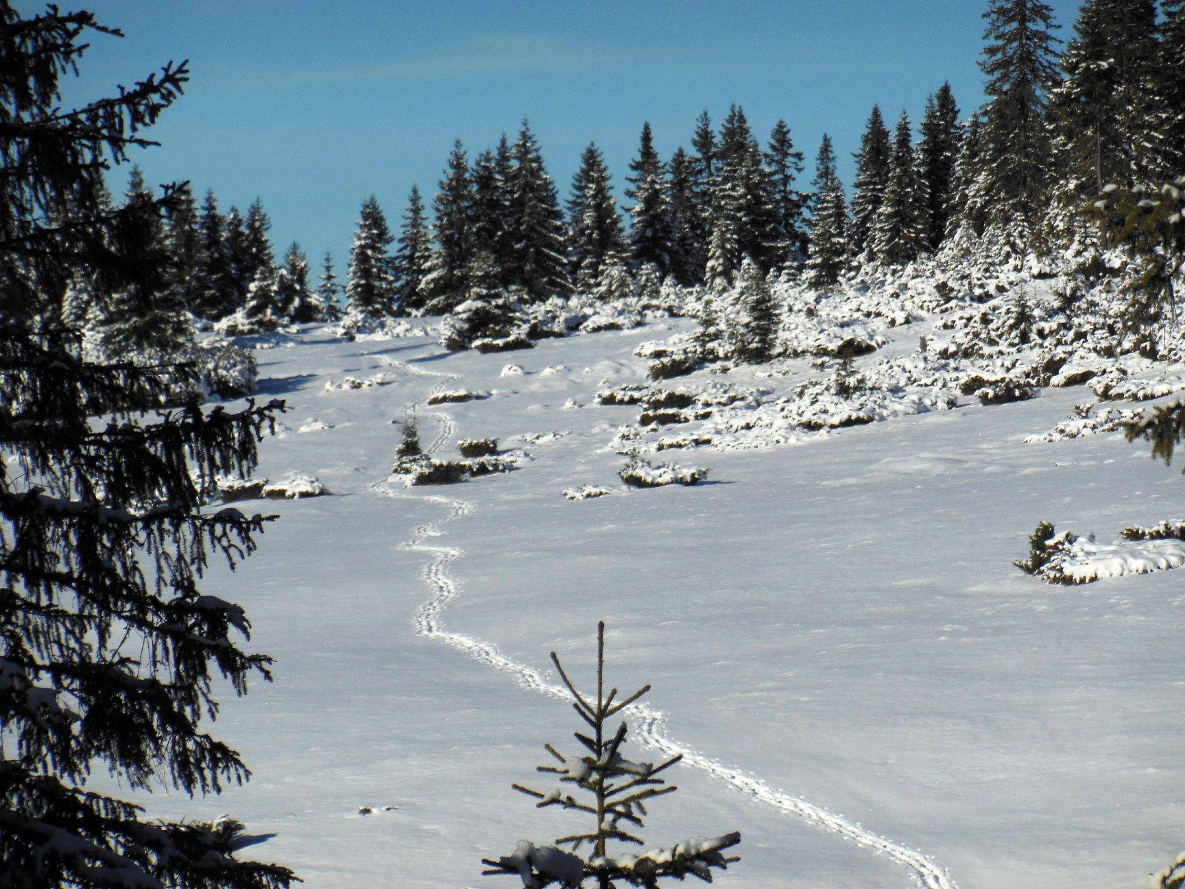 Франківець пішов у похід на милицях заради неймовірних фото зимових Карпат 26