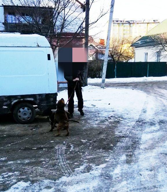 Бійцівських псів припнули на 10-метровий мотуз у дворі франківської багатоповерхівки 4