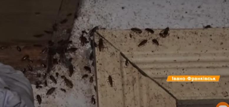 Хлам, таргани і грибок: у Франківську божевільні жінки діймають сусідів 8