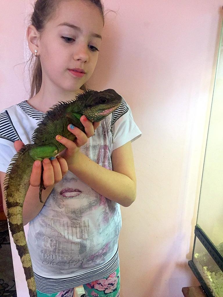 Родина франківців утримує вдома понад сотню змій, ящірок і крокодила 8