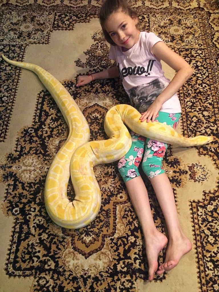 Родина франківців утримує вдома понад сотню змій, ящірок і крокодила 4